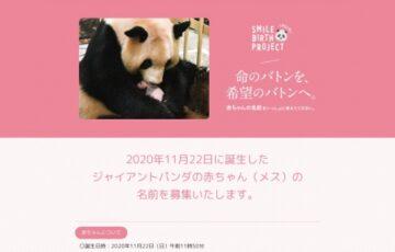 アドベンチャーワールド│SMILE BIRTH PROJECT ジャイアントパンダの赤ちゃんの名前募集